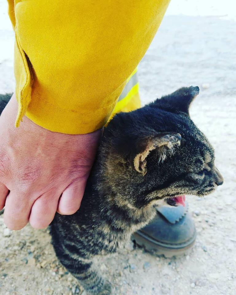 Amy Found This Survivor. A Cat Looking For A Human Friend.