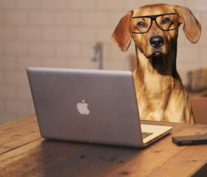 Research dog