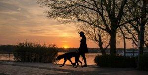 Try dog walking, or volunteering.