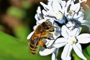 You can attract bees by planting flowers
