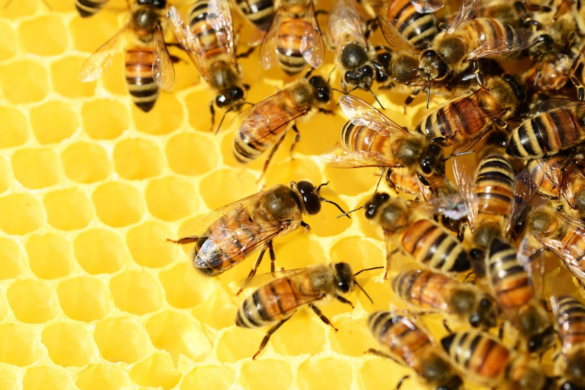 May 20th is World Bee Day